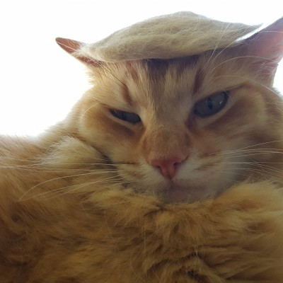 I made a Trump wig for my cat out of his fur.