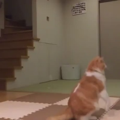 Cat leaping in slow motion