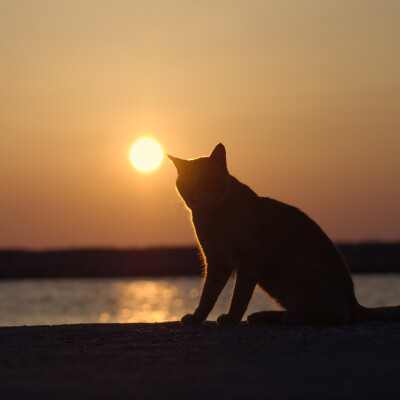 Greece. Sunset cat